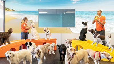 4 Benefits Of Top Dog Daycare Services In LA